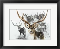 Framed Axis Deer