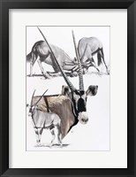 Framed Gemsbok