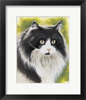 Framed Maine Coon