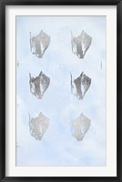 Framed 6-Up Silver Foil Shell III on Blue Wash III