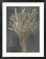 Framed Gold Foil Algae I on Black Wash