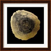 Framed Gold Foil Tree Ring IV on Black