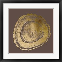 Framed Gold Foil Tree Ring III on Bitter Chocolate