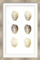 Framed 6-Up Gold Foil Shell II