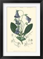 Framed Floral Botanique I