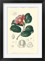 Framed Floral Botanique II