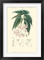 Framed Floral Botanique III