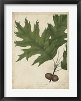 Framed Oak Leaves & Acorns II