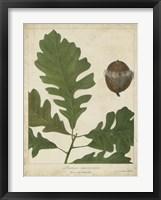 Framed Oak Leaves & Acorns III