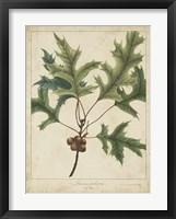 Framed Oak Leaves & Acorns IV
