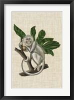 Framed Canopy Monkey II