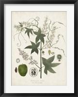 Framed Flowering Flora II