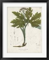 Framed Flowering Flora III