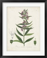 Framed Flowering Flora IV