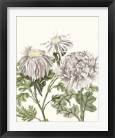 Framed Early Spring Chrysanthemums I