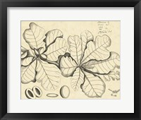 Framed Vintage Leaf Study I