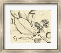 Framed Vintage Leaf Study II
