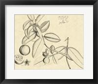 Framed Vintage Leaf Study III