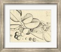 Framed Vintage Leaf Study IV