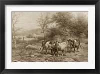 Framed Grazing Cattle