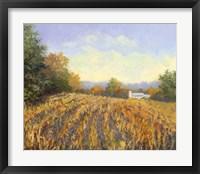 Framed Corn Rows