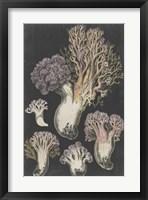 Framed Genus Clavaria I