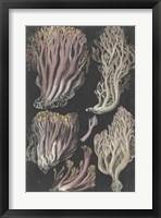 Framed Genus Clavaria II