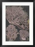 Framed Genus Clavaria IV