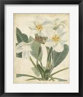 Framed Tropical Floral II