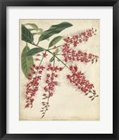 Framed Tropical Floral III