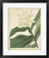 Framed Tropical Floral IV