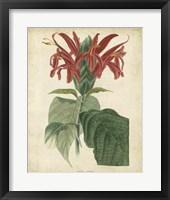 Framed Tropical Floral V