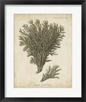 Framed Esper Antique Coral III