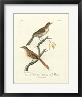 Framed Antique French Birds I
