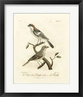 Framed Antique French Birds II