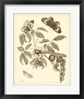 Framed Nature Study in Sepia II