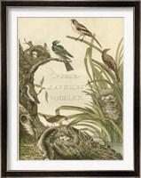 Framed Sanctuary for Birds