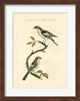 Framed Nozeman Birds I