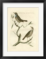 Framed Nozeman Birds II