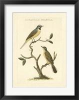 Framed Nozeman Birds III