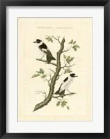 Framed Nozeman Birds IV