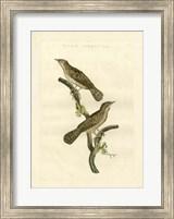 Framed Nozeman Birds V