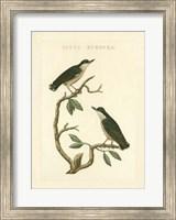 Framed Nozeman Birds VI