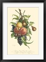 Framed Plentiful Fruits I