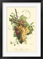 Framed Plentiful Fruits II