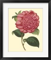 Framed Camellia Garden I