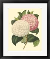 Framed Camellia Garden IV