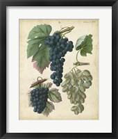 Framed Calwer Grapes I