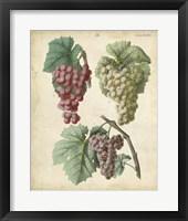 Framed Calwer Grapes II