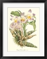 Framed Lavender Orchids I